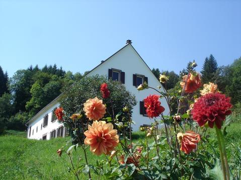 En pleine nature, au coeur des Vosges !