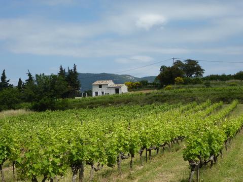 cabanon en Provence ventoux